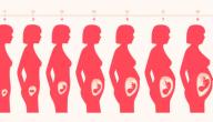 حاسبة الحمل والولادة : آلة حاسبة الحمل والولادة الدقيقة 2021 بالأسابيع والشهور الميلادية والهجرية