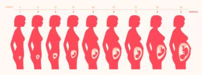 حاسبة الحمل والولادة مثل الطبيب