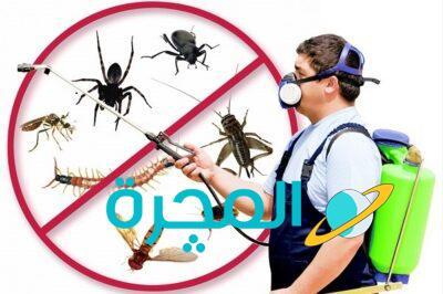 كيف أقضي على الحشرات في البيت